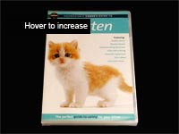 Kitten DVD Pack